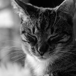 Mi gato vomita mucho ¿Motivos?