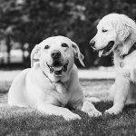 Hernias en perros ¿Cómo detectarlas?
